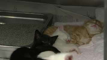 ... four kittens.