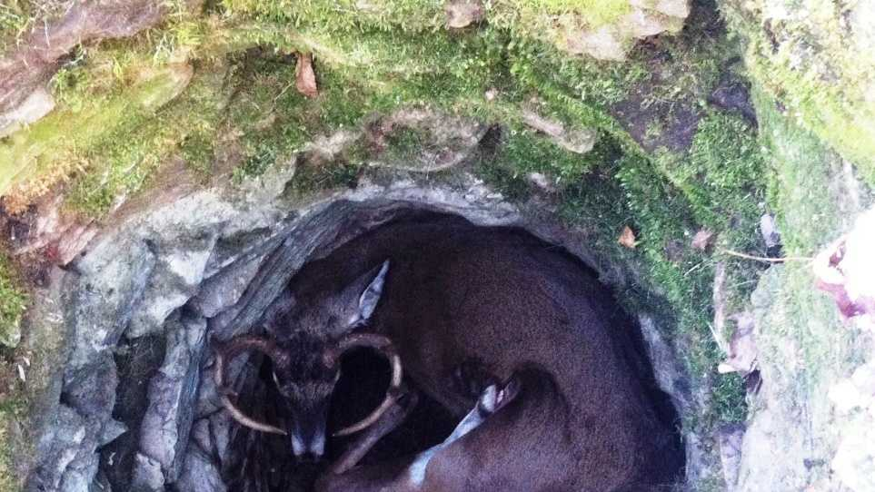 Deer Trapped in Well