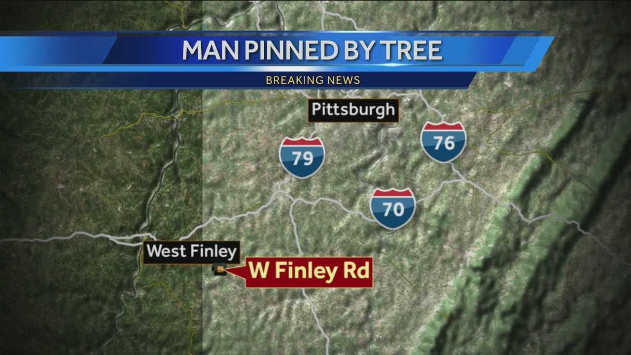 img-Man killed by falling tree in West Finley Township
