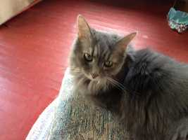 Assignment Editor Dennis Atkinson's cat Einstein.