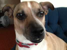 Photographer John McKee's dog Lola.