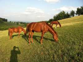 Photographer Terry Connell's horses - The Three Stooges.