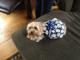 Assignment Editor Liz Brady's dog Pearl.