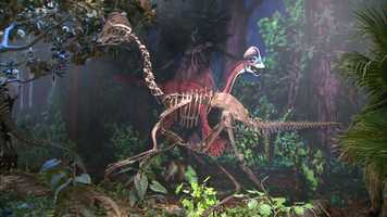 It's called the chicken from hell: a birdlike dinosaur some 7 feet tall that weighed around 500 pounds when it roamed western North America on its long, slender hind legs.