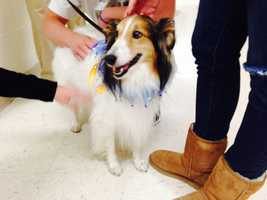 Therapy dogs are at work inside the halls of Franklin Regional High School. These photos were provided by the school district.