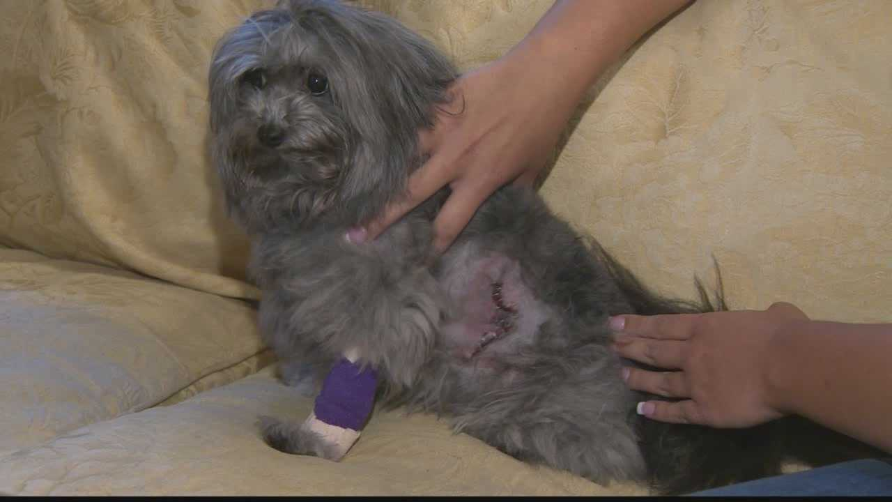 Owner says dog maimed during grooming at pet store