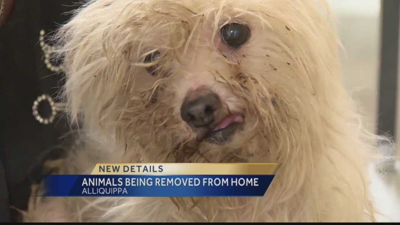 img-Dozens of animals removed from Aliquoppa home