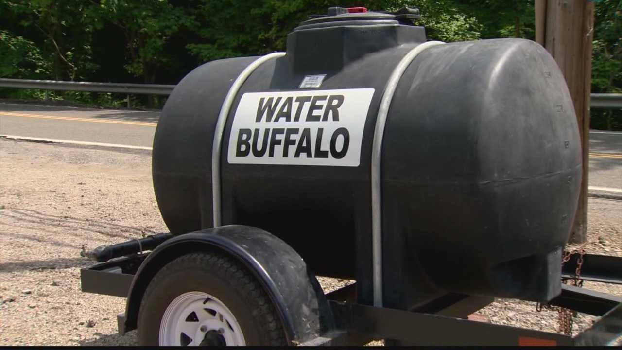 img-Water Buffalo