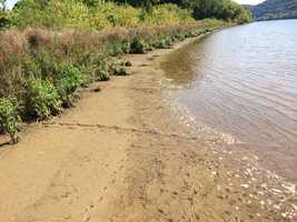 A trail possibly left by an alligator at the Allegheny River in Cheswick.