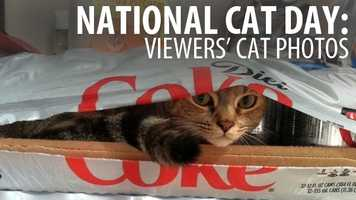 It's National Cat Day and our viewers have been sharing photos of their feline friends. Check out their photos in this slideshow!