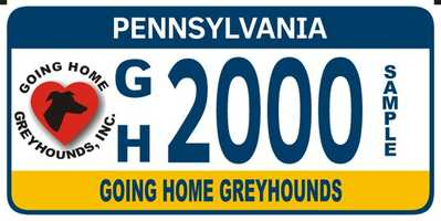 Going Home Greyhounds
