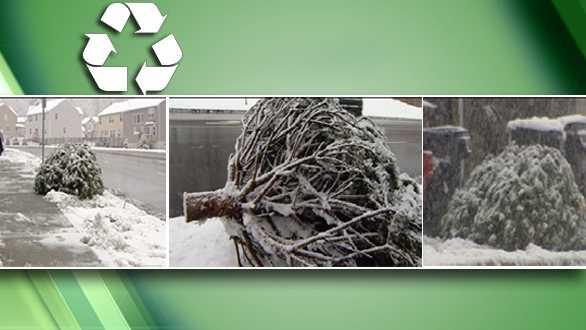 recycle-xmas-tree-610.jpg