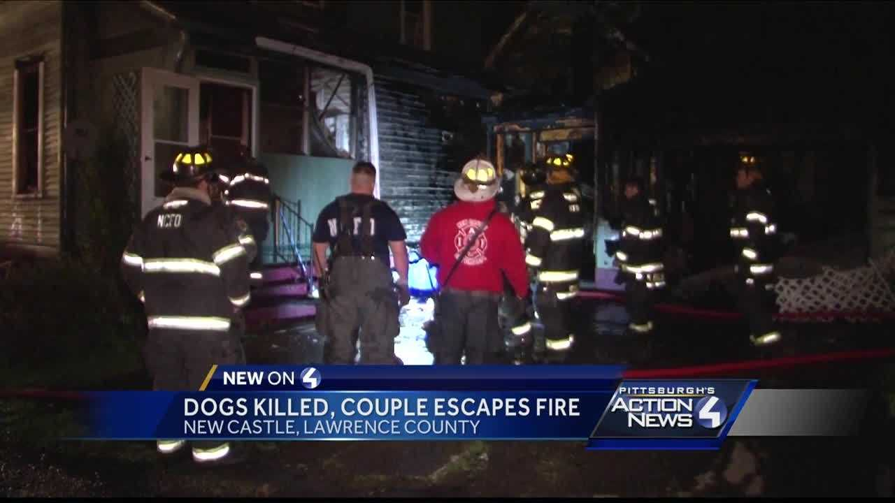 img-dogs killed in New Castle fire