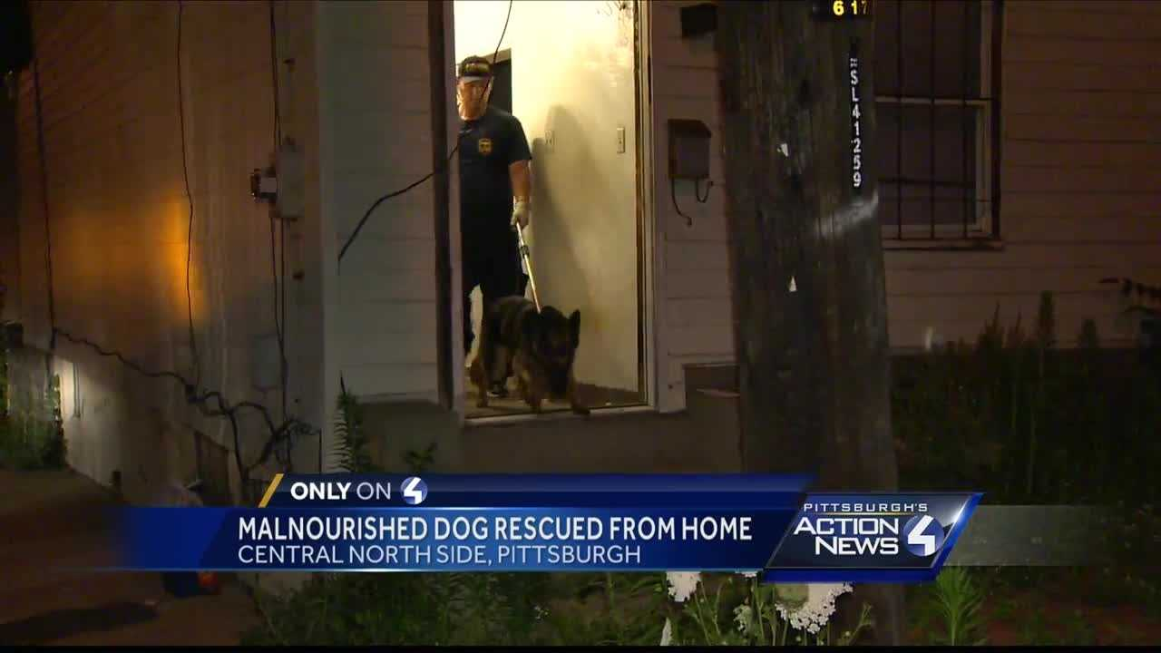 Malnourished dog found on Pittsburgh's North Side