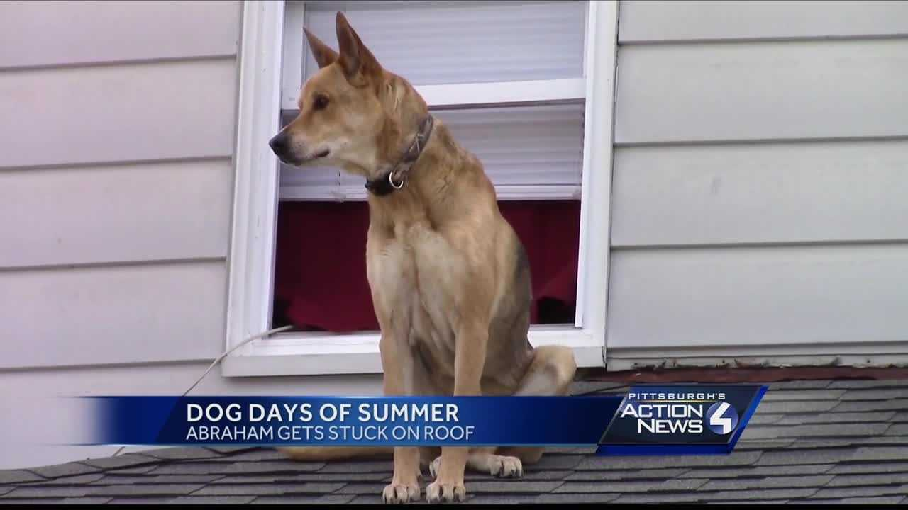Dog stuck on roof in New Castle