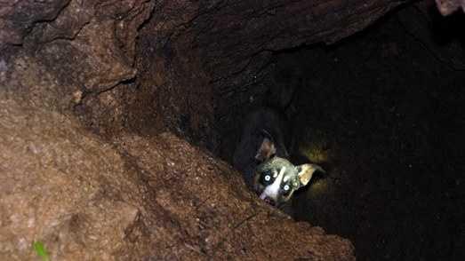 Dog in Mine-1.jpg
