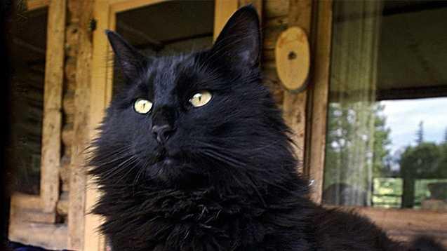 black-cat-610.jpg