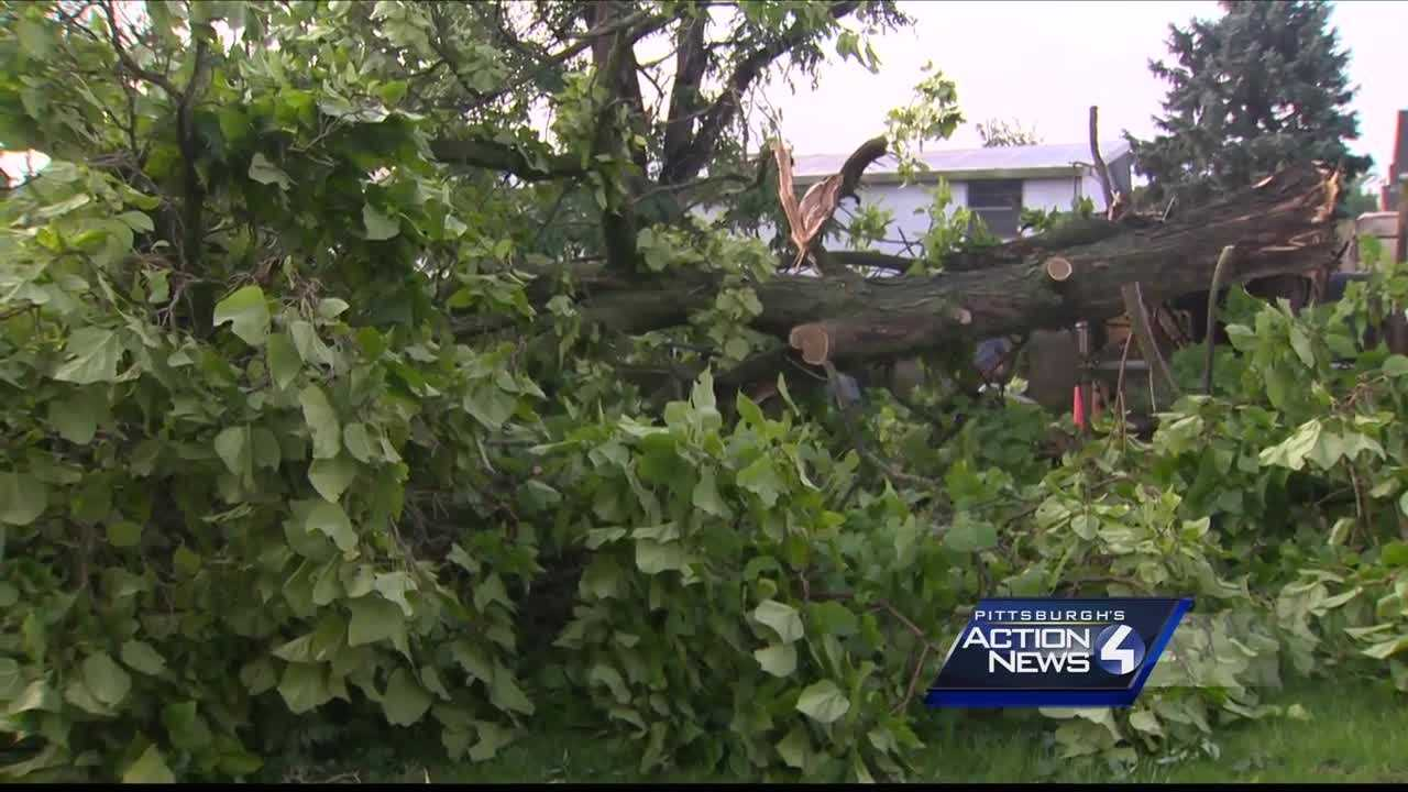 img-Donora tornado tree damage