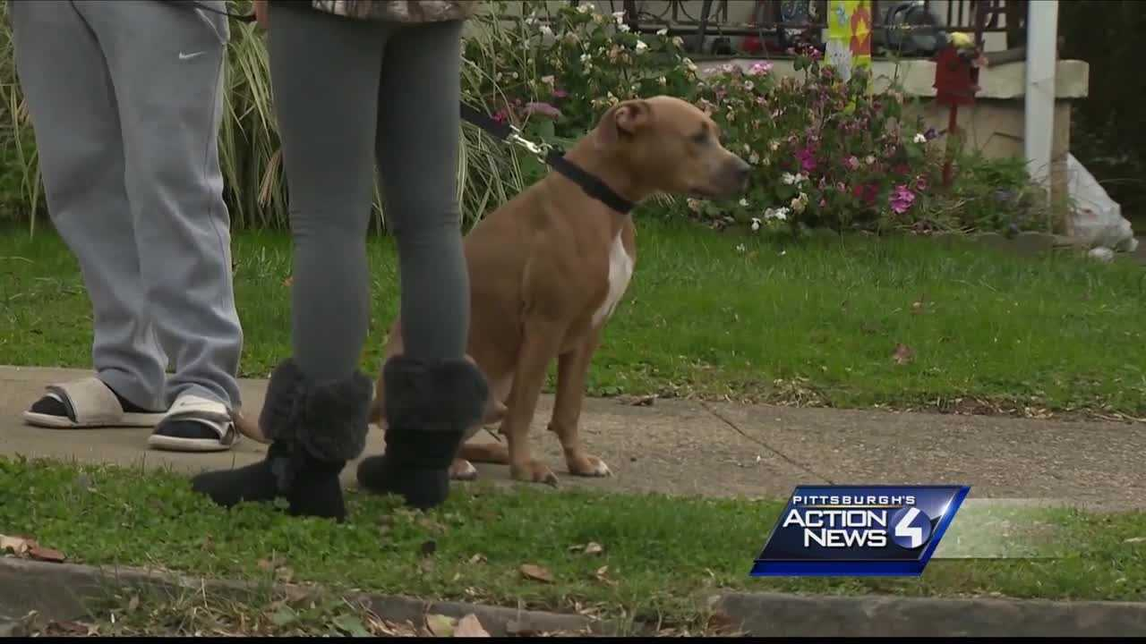 img-Pit bull halts mail delivery after dog jumps on worker