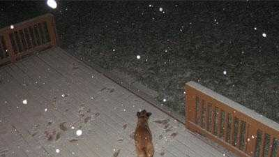 u local snow photo -- dog on porch - 22012900