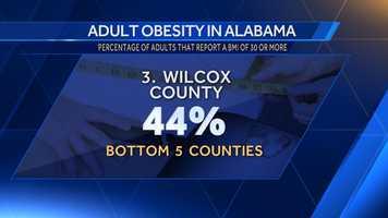 3. Wilcox County