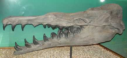 The Basilosaurus cetoides was deemed the state fossil in 1984.