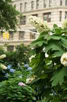 The oak-leaf hydrangea was deemed the state wildflower in 1999.