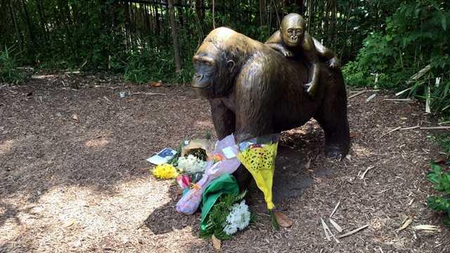 Cincinnati gorilla exhibit