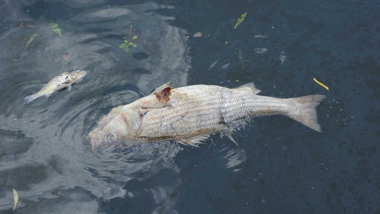 WVTM Dozens of fish found dead.jpg