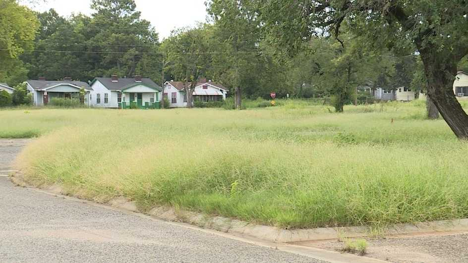larkway grass.JPG