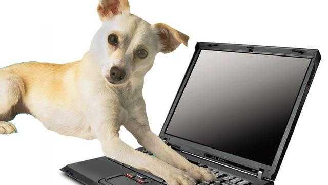 Pet Scoop - 29933104
