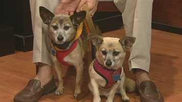 Forsyth Humane Society - Rex and Zoe