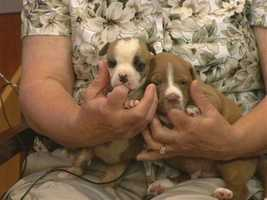 Puppies from Animal Adoption and Rescue Foundation (AARF) - PUPPIES!!!