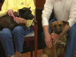 Animal Rescue and Adoption of Surry County - Chelsea