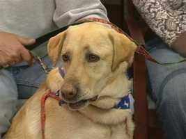 Humane Society of Wilkes - Barney