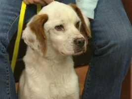 Burlington Pet Adoption Center - Riley