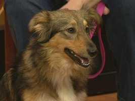 Davie County Humane Society - Shelby