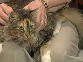 Animal Adoption and Rescue Foundation (AARF) - Savannah