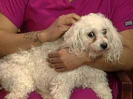Forsyth County Animal Shelter - Rocky