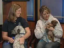 Yadkin County Animal Shelter - Flurry and Mocha
