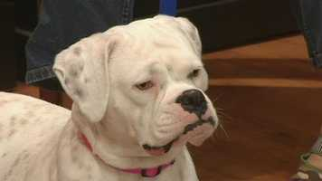 Meet Bessie, WXII12's Pet Of The Week. Laura Martin from Davie County Humane Society has more.