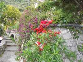 Beautiful lush gardens and flowers all over Positano, Italy for photograph memories too.