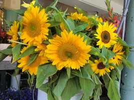 Sunflowers were in abundance at the Pike Place Market in Seattle, Washington.
