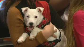 Meet Cheer and his friends, WXII12's Pet Of The Week. Robin Manly from Finding Great Homes Rescue has more.