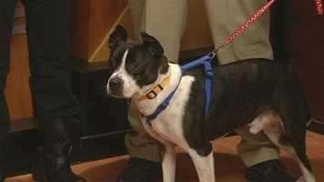 Hank from Forsyth Humane Society