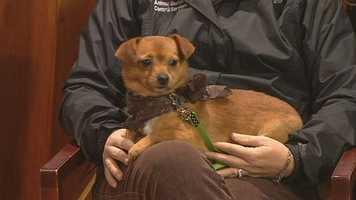 Tamone from Yadkin County Animal Shelter