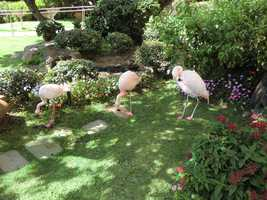 Flamingos run wild around the hotel as well as other animals in Maui.