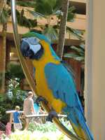 The Maui hotel parrot seems to be friendly.