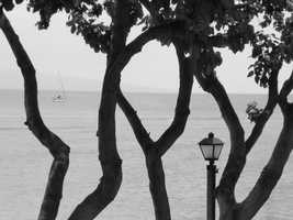 Angela gets some good photos, like this black and white with the sailboat in the distance between the tree branches.