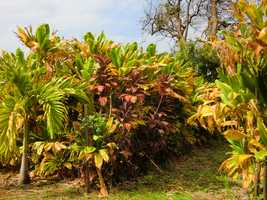 All kinds of beautiful tropical plants and produce are being farmed on the Maui Tropical Plantation in Lahaina.